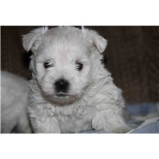 View full profile for Westies