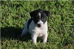 Picture of LOKI- MALE BLACK/WHITE  RT MINI SIZE- READY 7-8