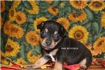Picture of ECHO-BLK & TAN RT MALE- READY OCT 24