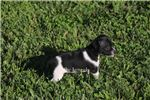 Picture of SYDNEY- MINI BLACK/WHITE COLORED FE RT- READY 7-8