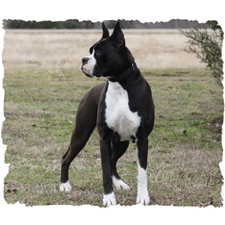 View full profile for K And J's Country Pups