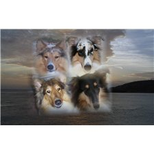 View full profile for D&D Collies