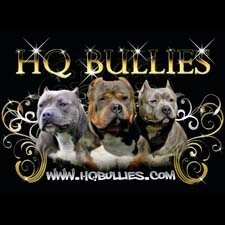 View full profile for Apbt Puppies