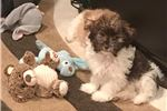 Picture of baby boy (Snuggles) 631-513-8257