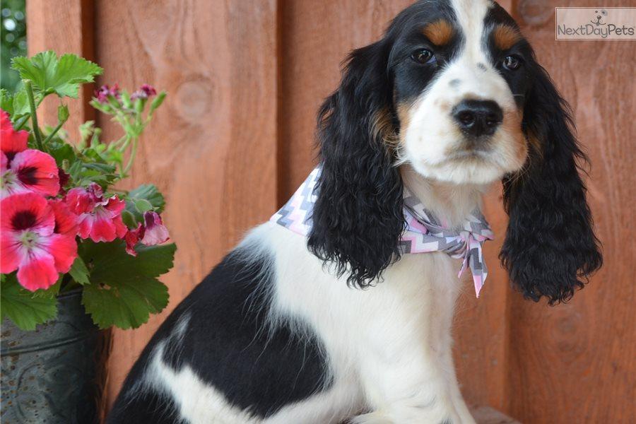 Female Dog Names English Springer Spaniel