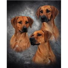 View full profile for Ridgebacks By Kat - Mardi Gras Rhodesian Ridgebacks