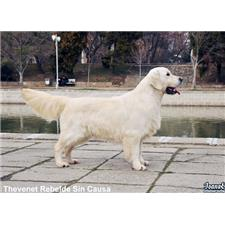 View full profile for Southern Shades Kennel