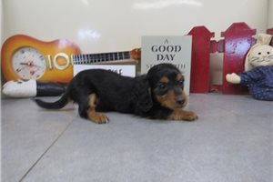 Picture of Inka