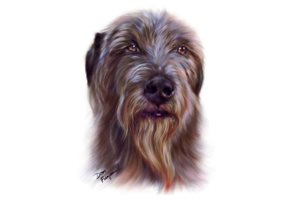 Irish Wolfhounds for sale
