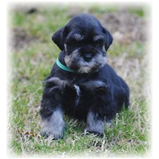 View full profile for PUPS 4 US
