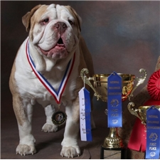 View full profile for Anderson Bulldogges