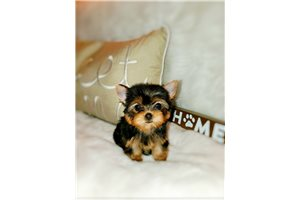 Picture of Teacup Chloe