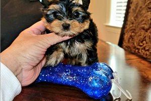 Picture of Tiny Bentley
