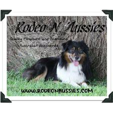 View full profile for Rodeo N Aussies