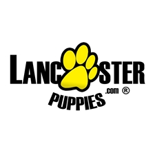 View full profile for Lancaster Puppies