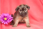 Picture of Jaden, Male, $1195