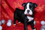 Picture of Dorothy, Female, $900