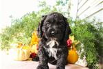 Picture of Finn, Male, $800