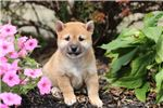 Picture of Milly, Female, $1150