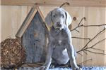 Picture of Sally, Female, $750