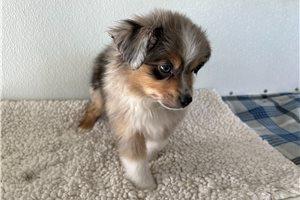 Picture of Shiloh