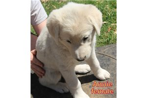 Picture of Annie