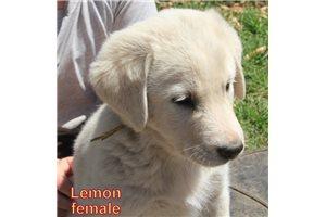 Picture of Lemon