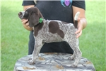 Picture of Winkelmansgundogs.com 815-871-8687
