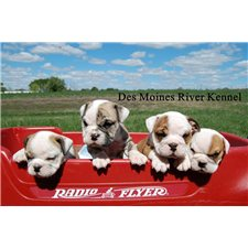 View full profile for Des Moines River Kennel
