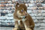 Picture of Wild Wyatt