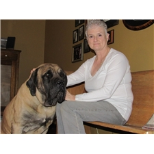 View full profile for Hocus Pocus Mastiffs