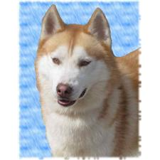 View full profile for Boreayl Siberian Huskies