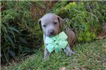 Picture of Bella Blue Girl ready Dec 22