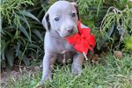 Picture of Hollie Blue Girl Ready for pickup Dec 22