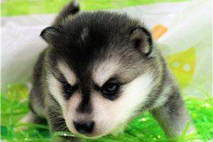 Picture of Kodiak