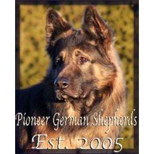 View full profile for Pioneer German Shepherds