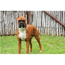 View full profile for Hill Country Boxers