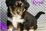 Picture of Royal ~ Because Only The Best Will Do!