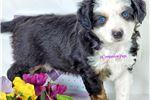 Picture of VIDEO ~Fuzz ~ Playful Love Bug ~ CompanionPups.com