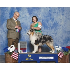 View full profile for Bredeja Australian Shepherds