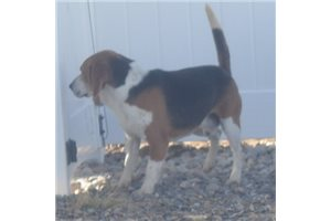 Picture of Champ Dad Mabel