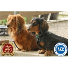 View full profile for Bountiful Dachshunds