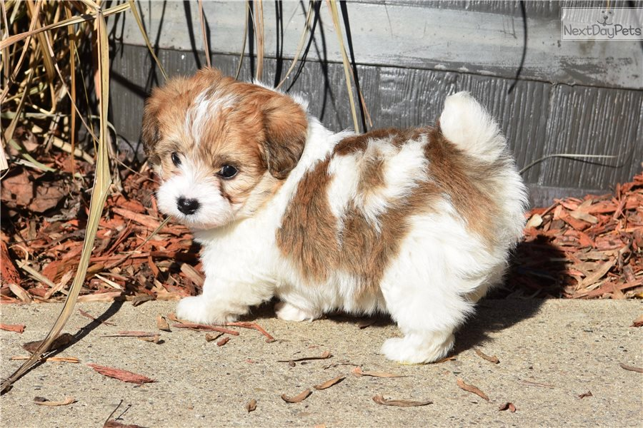 Zap: Mixed/Other puppy for sale near Northern Panhandle ...