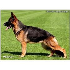 View full profile for Von Rosenwald German Shepherds