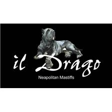View full profile for Il Drago Kennels