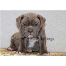View full profile for One Of A Kind Bulldogs