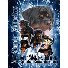View full profile for Guardian Rottweilers