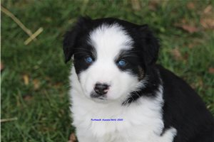 Picture of Amore blue eyes