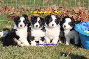 Picture of Upcoming litter