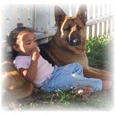 View full profile for Rehoboth Long Coat German Shepherd Dogs
